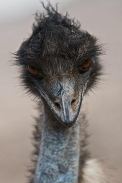 16 Emu 2008-09-30 at 14-11-30