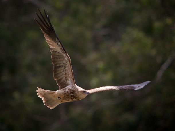 19 hawk 2008-09-30 at 11-37-11 (2)
