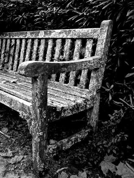 4 Mossy Bench 46