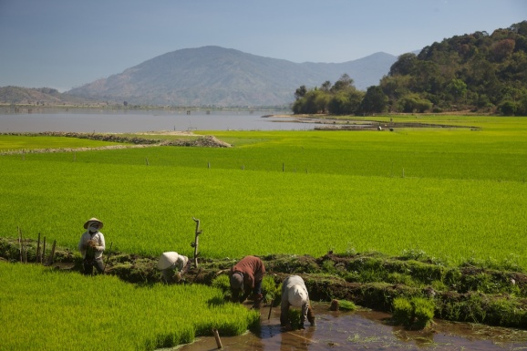 Paddy Field, river