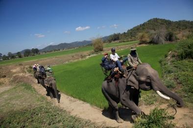 Elephants on trail