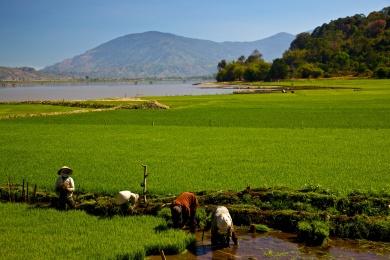 Rice Paddies, central Vietnam.