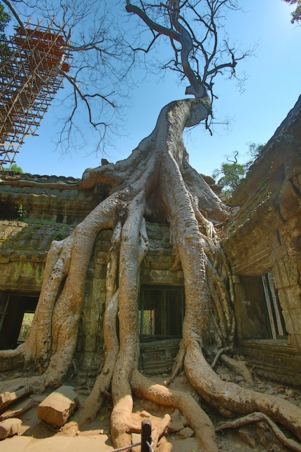 Temple Tree HDR